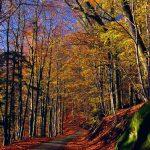 Route de Neuwiller